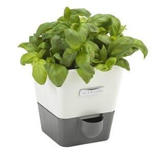 COLE & MASON Indoor Herb Garden Self-Watering Planter