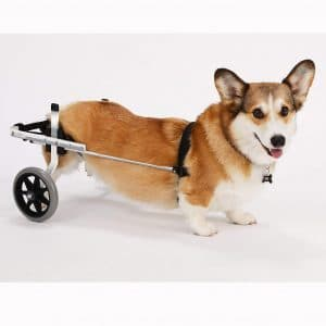 K9 Carts | The Original Dog Wheelchair | Veterinarian Established | Custom Built in The USA