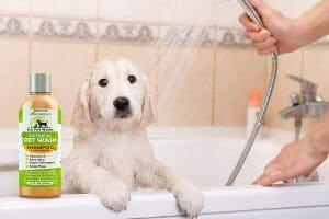Top 10 Best Dog Shampoos