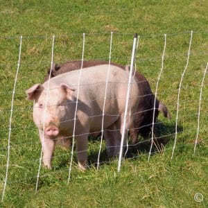 "Premier ElectroNet Sheep & Goat Netting Fence, 35""H x 164'L, White, Single Spike - Premier Top Seller"